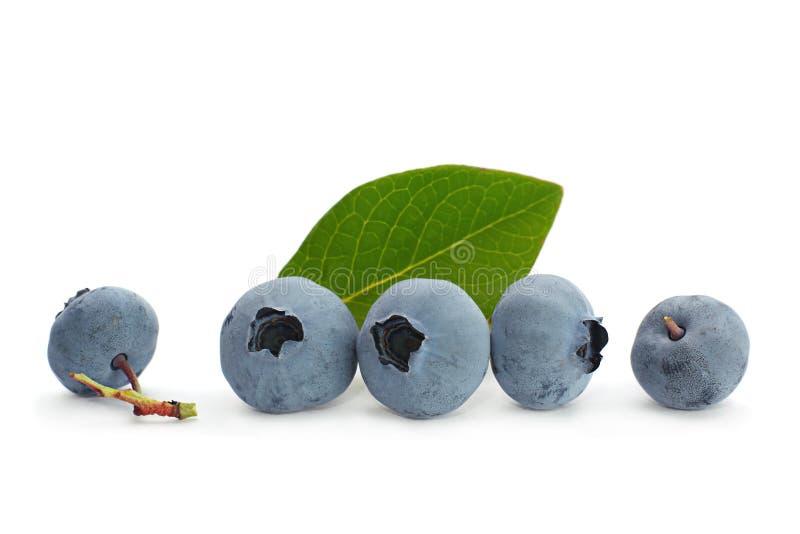 蓝莓果子 图库摄影