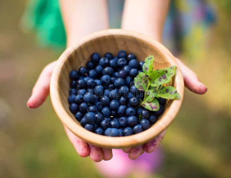 蓝莓现有量暂挂 库存照片