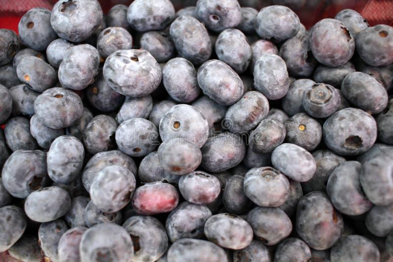?? 蓝莓背景纹理 果子充分的框架  维生素和饮食概念 E r 免版税图库摄影
