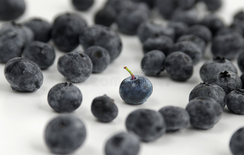 蓝莓许多 免版税库存图片