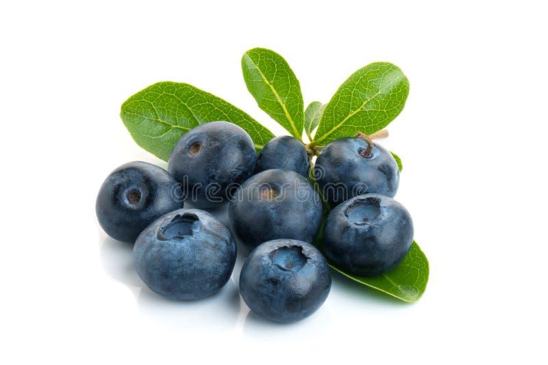 蓝莓 与在白色背景隔绝的叶子的两个新鲜的蓝莓 Brot 库存图片