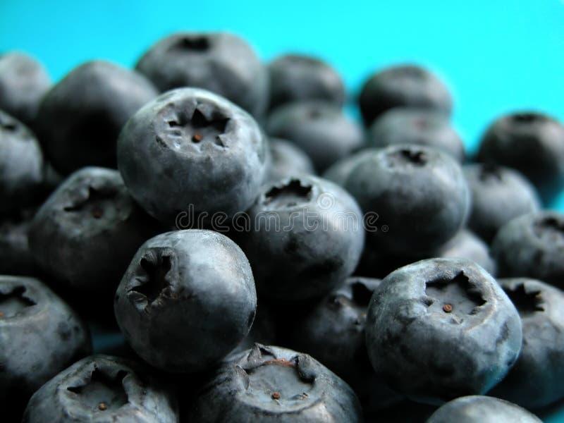 Download 蓝莓 库存图片. 图片 包括有 问题的, 特写镜头, 庭院, 果子, 新鲜, berrying, 健身, 饮食 - 177705