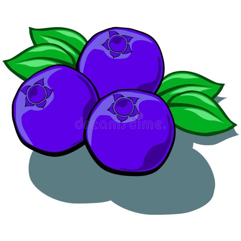 蓝莓 向量例证
