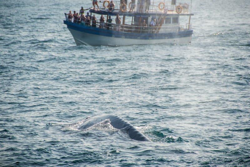 蓝鲸后面 免版税库存照片