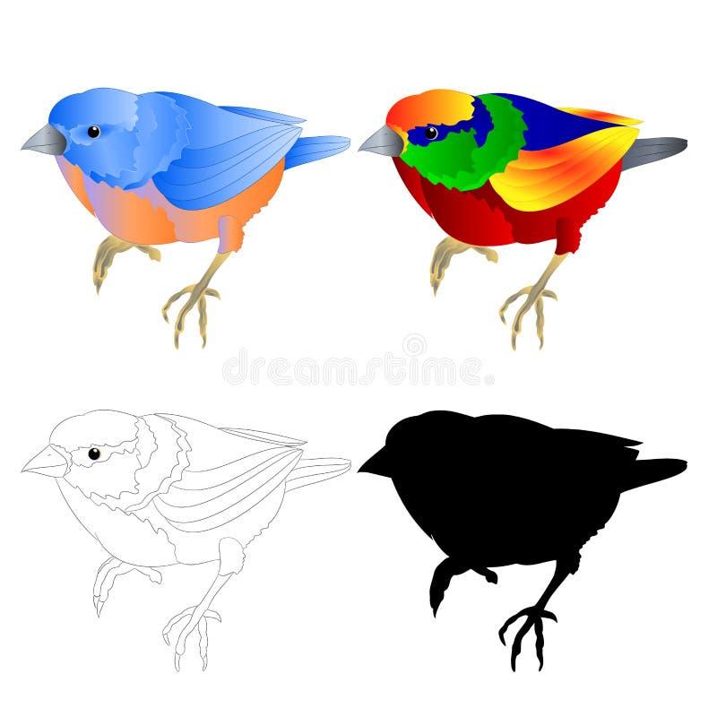蓝鸫小鸟鹅口疮和热带鸟概述和剪影在编辑可能一个白色背景葡萄酒传染媒介的例证 皇族释放例证