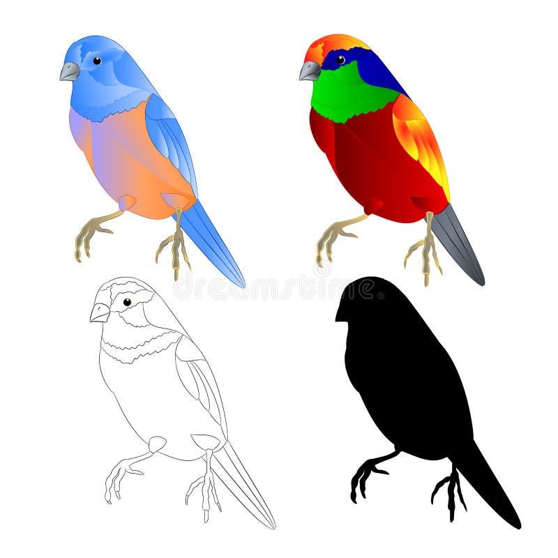 蓝鸫小鹅口疮和热带鸟概述和剪影在编辑可能一个白色背景葡萄酒传染媒介的例证 向量例证