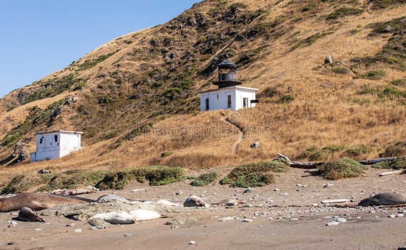 蓬塔戈尔尔达灯塔在有草的Petrolia加利福尼亚,远足道路和地方封印居住 库存照片