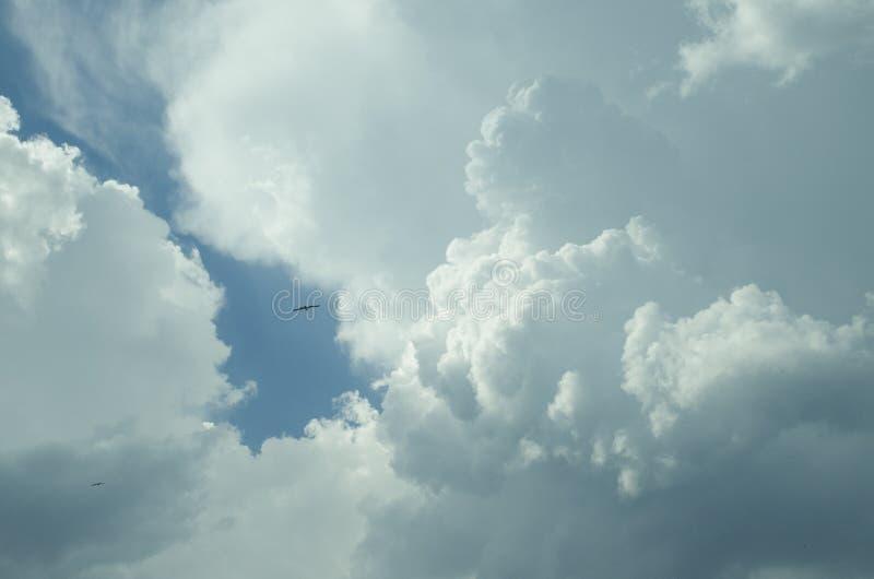 蓬松云彩和一只鸟在天空 免版税库存照片