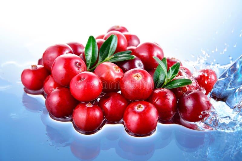 蔓越桔。莓果堆在水中 免版税图库摄影