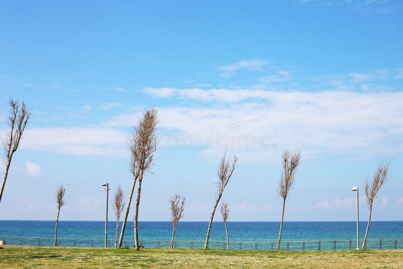 蔚蓝的大海,高大的树木,纯净的天空 免版税库存图片