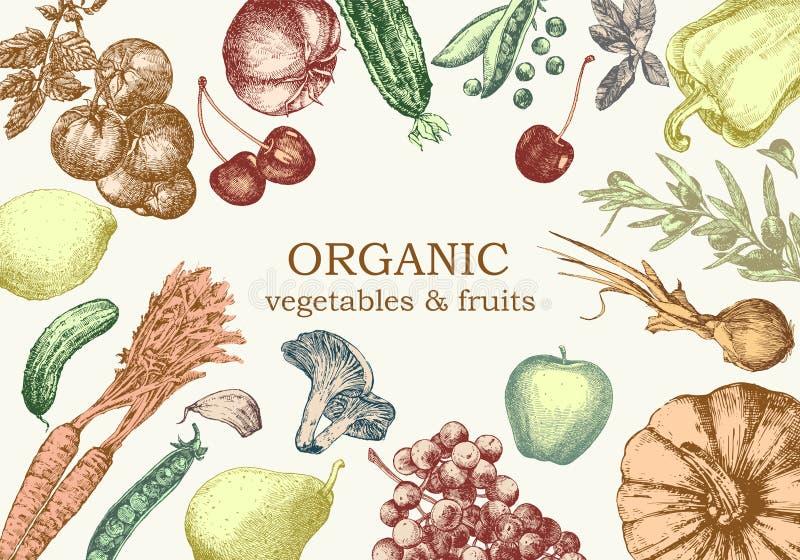 蔬菜和水果的手拉的例证 向量 免版税库存图片
