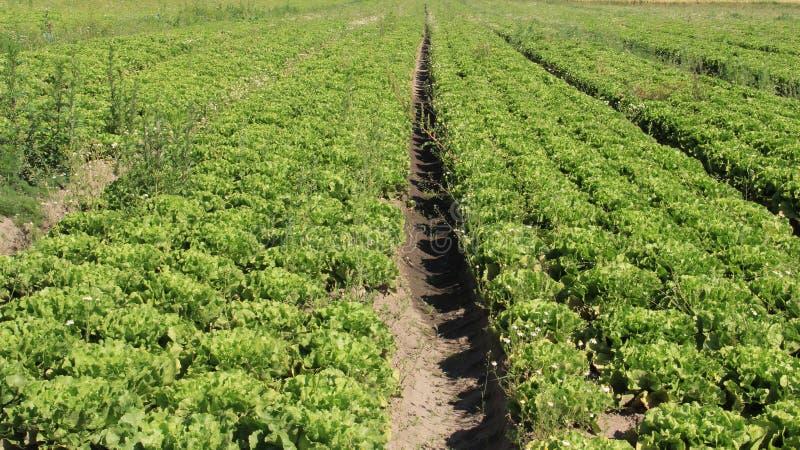 蔬菜沙拉 河床有机蔬菜 库存图片