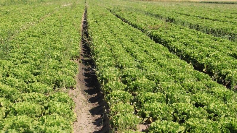 蔬菜沙拉 河床有机蔬菜 免版税库存图片