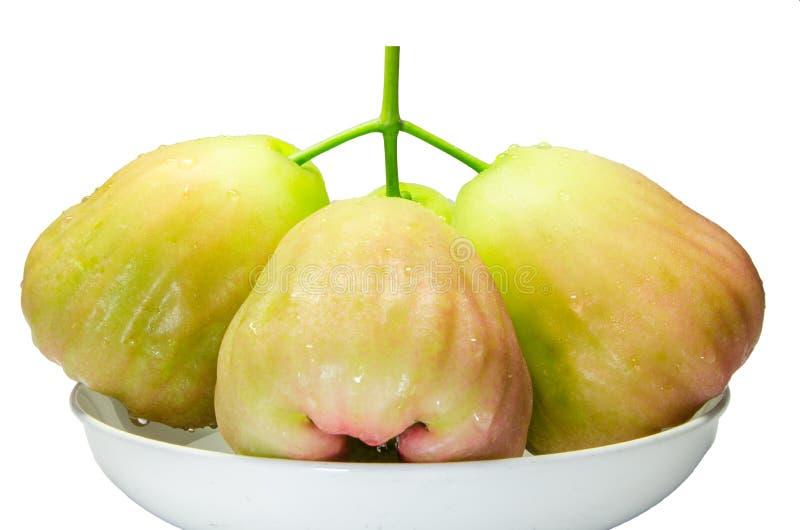绿蔷薇苹果计算机 免版税库存图片