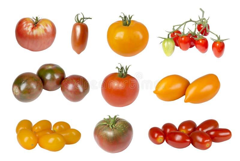 蕃茄不同的品种拼贴画  库存图片