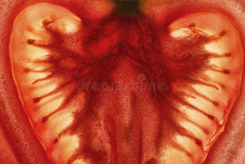 蕃茄切片被启迪紧密背景 图库摄影