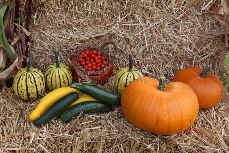 蕃茄和南瓜秋天收获在秸杆背景 免版税图库摄影
