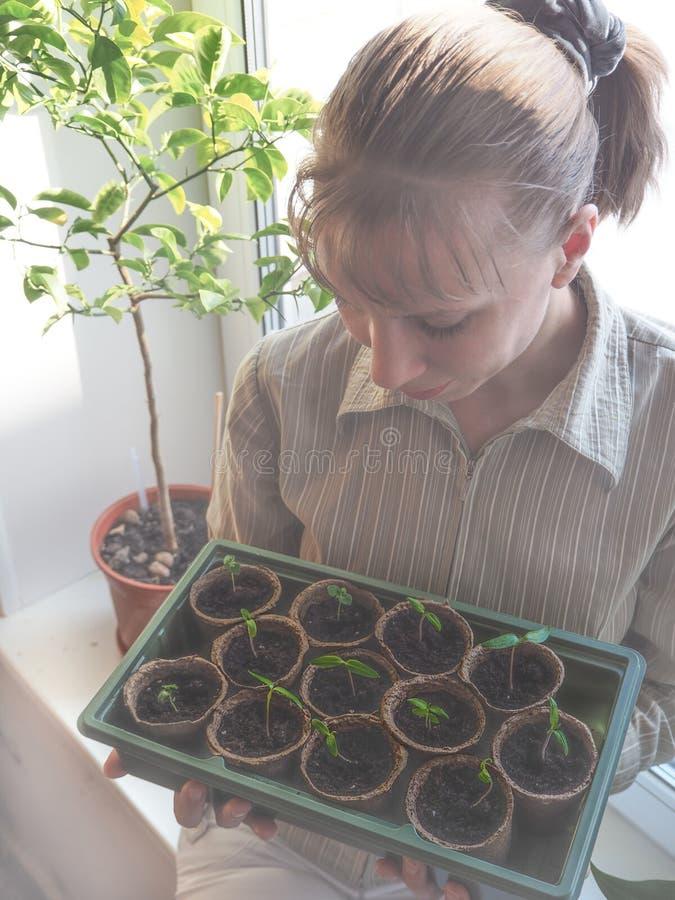 蕃茄幼木在泥煤罐的 菜农业 免版税图库摄影