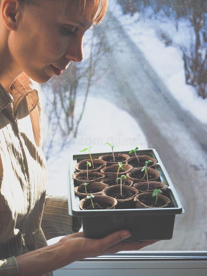 蕃茄幼木在泥煤罐的 菜农业 免版税库存照片