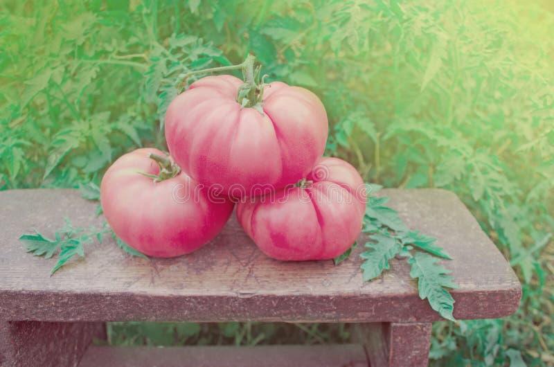 蕃茄桃红色菜  库存图片