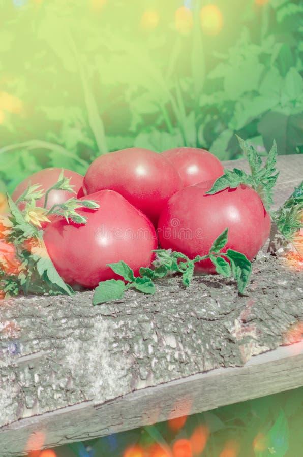 蕃茄桃红色菜  免版税库存图片
