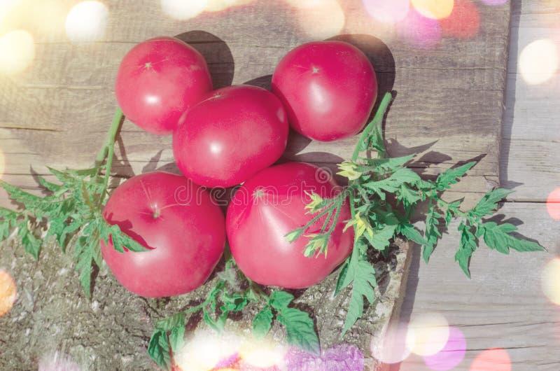 蕃茄桃红色菜  免版税库存照片