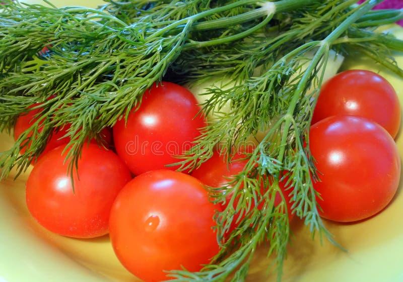 蕃茄用莳萝 图库摄影