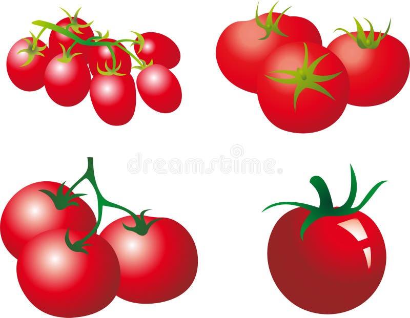 蕃茄 库存例证