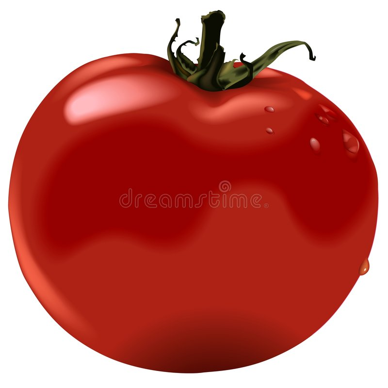 蕃茄 向量例证