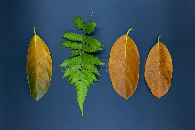 蕨叶子和橙色叶子在黑背景 在台式视图照片的秋天叶子 秋天季节性装饰 图库摄影