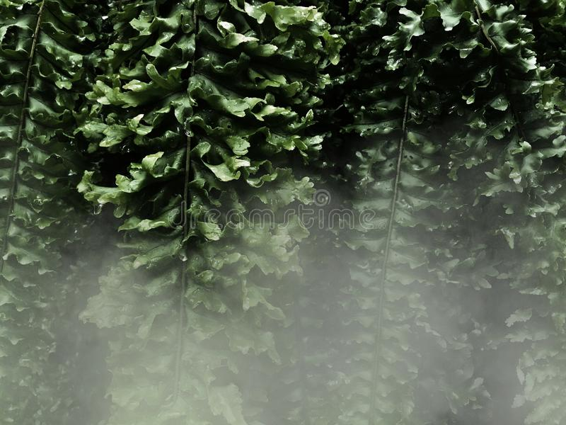 蕨叶子和白色雾在黑暗的背景中 向量例证