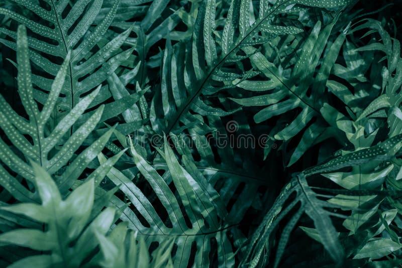 蕨叶子在庭院里 免版税图库摄影