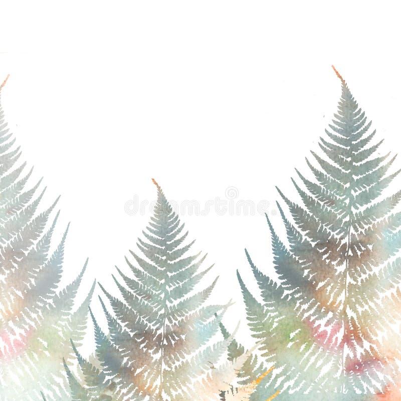 蕨叶子的例证在白色背景的 样式2 向量例证