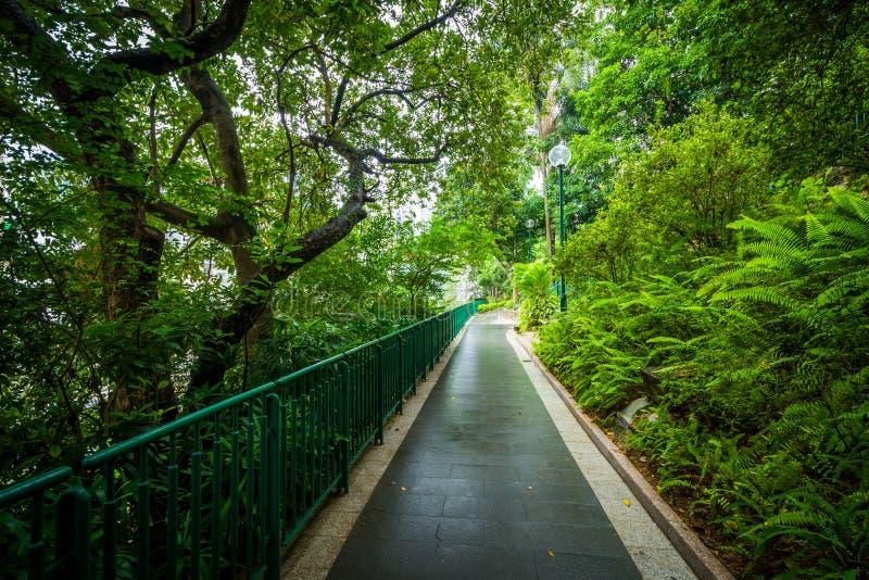 蕨和树沿一个走道在动物学的香港和Bota 免版税库存照片