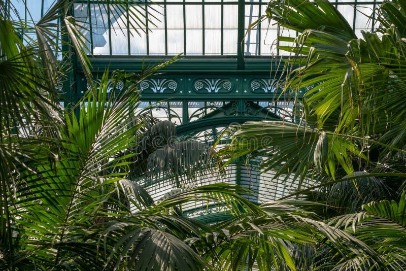 蕨和棕榈在印象深刻的冬季花园内部,一部分的皇家温室在拉埃肯,布鲁塞尔,比利时 免版税图库摄影