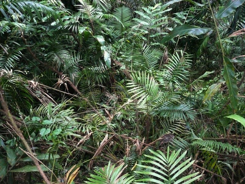 蕨和草,部分干燥,在密林 库存照片