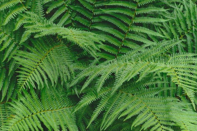 蕨在软的颜色背景表面把绿色叶子留在 库存照片