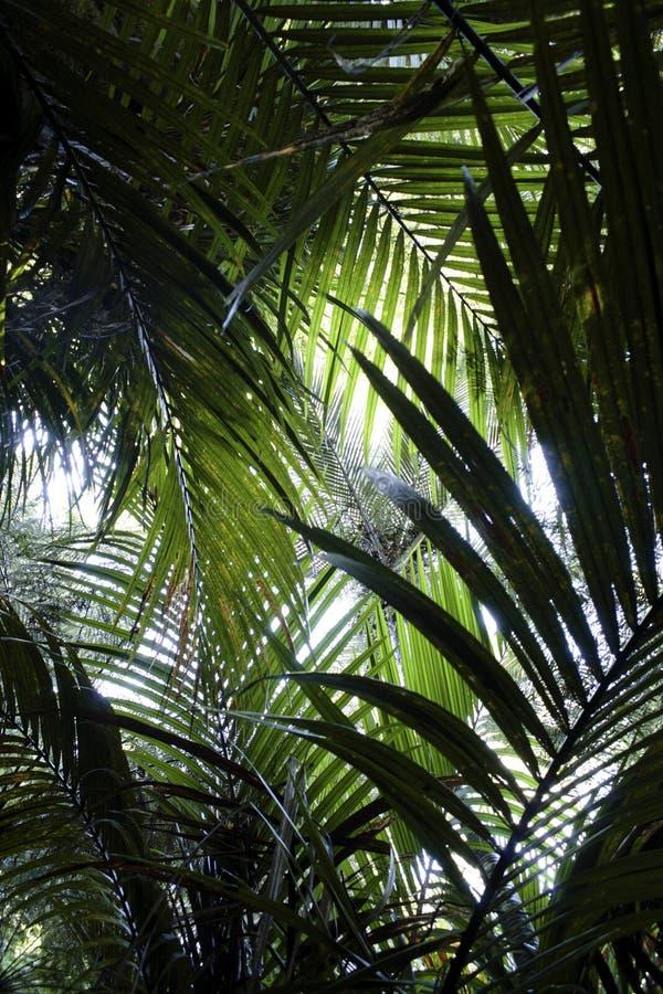 蕨密林 免版税库存图片