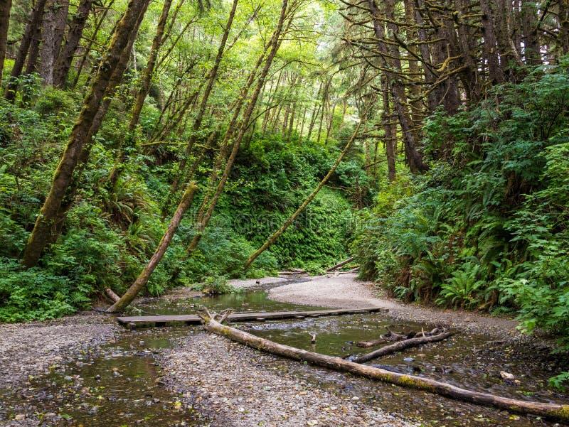蕨峡谷在红木国家公园 免版税库存照片