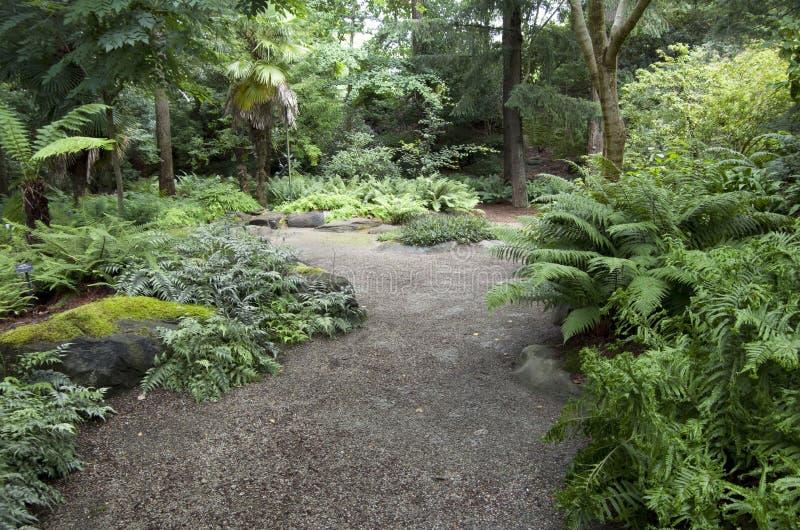 蕨庭院 库存照片