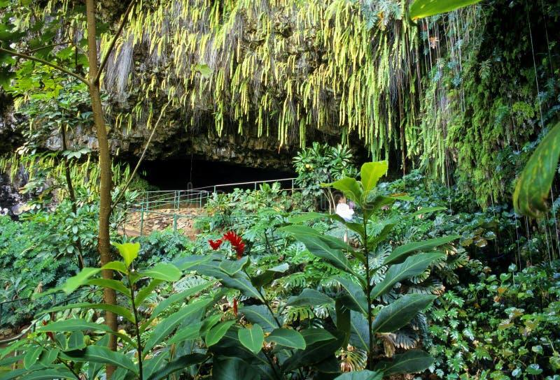 蕨洞穴考艾岛 免版税库存图片