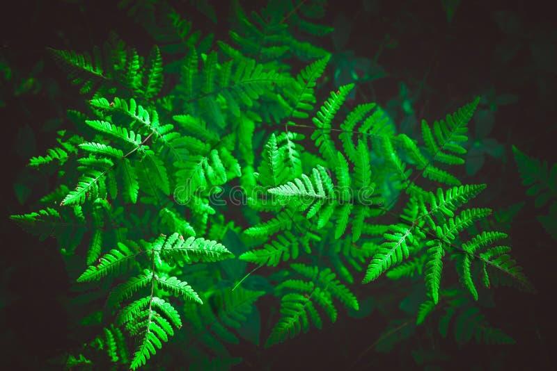 蕨的布什在秋天森林离开 图库摄影