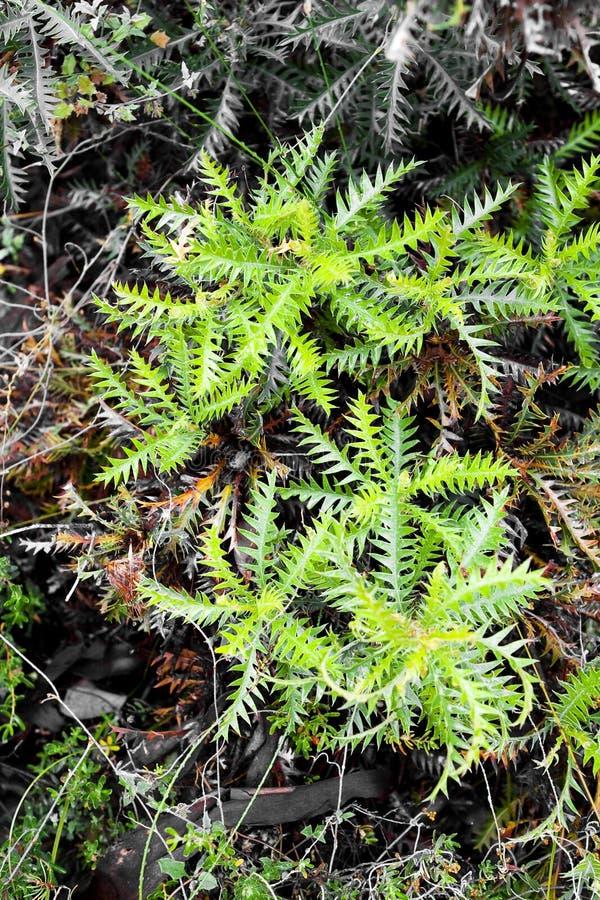 蕨类的绿色 免版税图库摄影