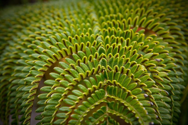 蕨绿色热带 免版税图库摄影