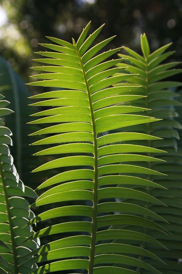 蕨绿色 免版税图库摄影