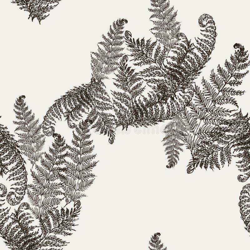 蕨草本,热带森林植物留下无缝的传染媒介包装纸 现代草本样式 蕨叶子,森林 皇族释放例证