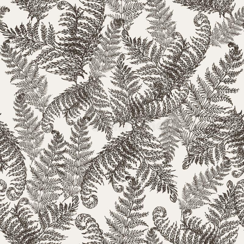 蕨草本,热带森林植物留下无缝的传染媒介包装纸 现代草本样式 蕨叶子,森林 向量例证