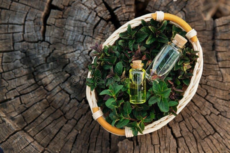 薄荷的油和芬芳精华在小瓶用薄荷l 免版税库存照片