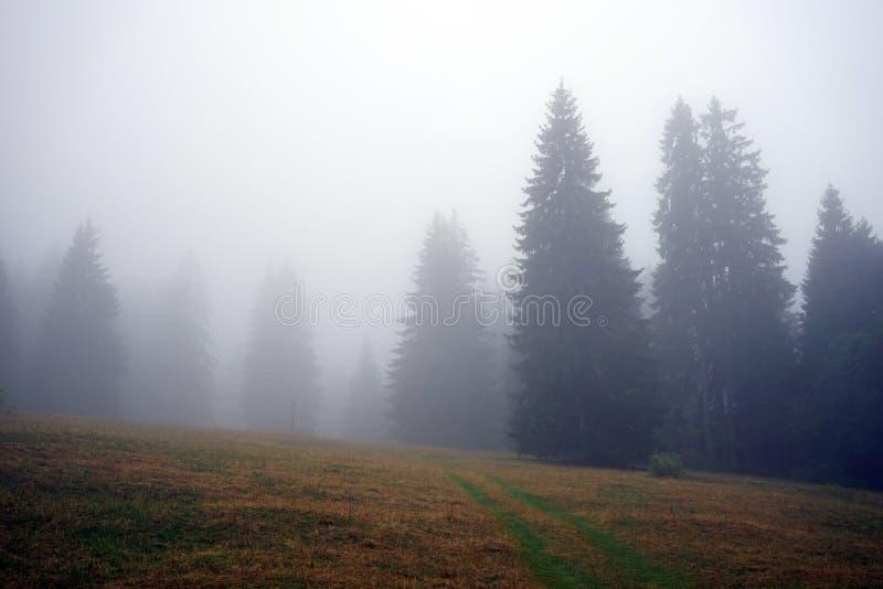 薄雾和森林 免版税库存图片