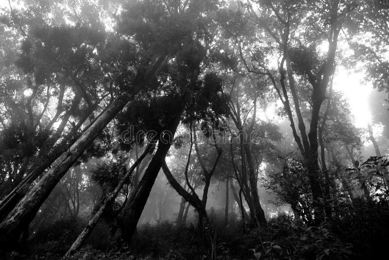 薄雾在早晨 免版税库存图片